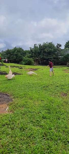 16 acer agriculture land in Dahanu 21lakh per  acer