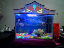 Want to sell my fish tank