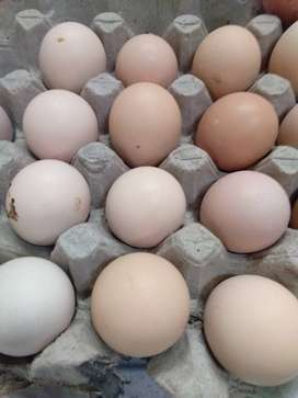 Jual Telur Ayam Kampung