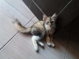 lepas adop kitten persmed