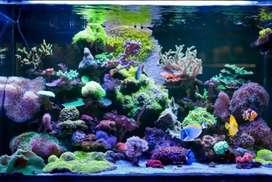 Jasa Dekor Aquarium Laut Full Biota