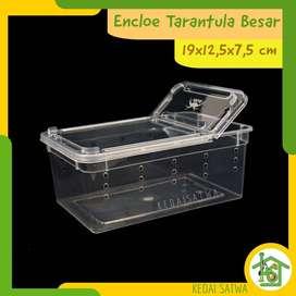 Kotak Reptil Enclo Reptile Tarantula Vivarium gecko Feeding Box Kandan