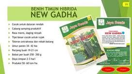 BENIH TIMUN HIBRIDA Varietas NEW GADHA