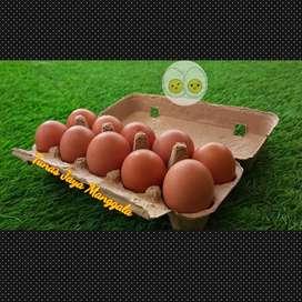 Paper egg / box telur kertas 10 lubang kunci