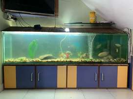 6.5' feet 12mm glass heavy aquarium