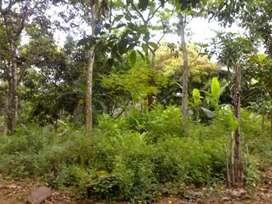 Tanah untuk INVESTASI pasti UTUNG BERLIPAT Di kedung banteng Purwokrto