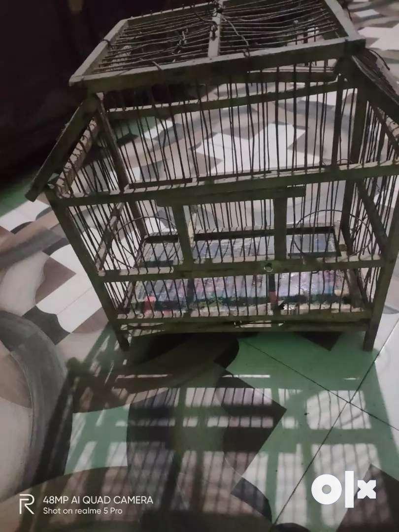 Birds cage 0
