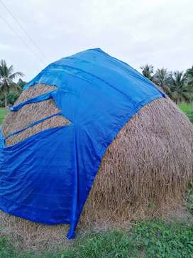 Paddy hay vaikol vaikkal for sale