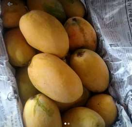 Mango in cheapest prices