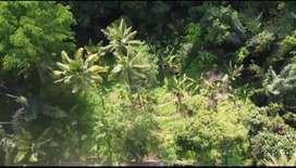 Tanah untuk villa view jungle dan sawah