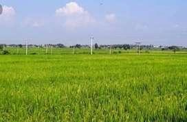 Near The Kisan Sahakari Chini Mills , satha, Aligarh, uttar pradesh