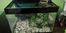 Aquarium bekas fullset dengan filter bonus hiasan dan krikil hias