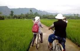 Sewa tanah sawah kawasan wisata Wanurejo Borobudur