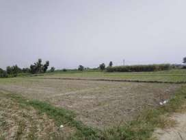 150 kanal agriculture land for sale