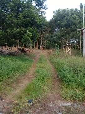Tanah kebun 200meter