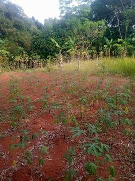 Dijual Tanah Murah Dekat Taman Buah Mekarsari