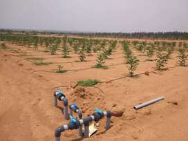 200 Acres Mega Project at Patancheru Farmland plots for sale