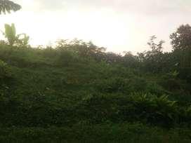DiDijual Tanah di Desa Dukuh Waringin Kec. Dawe Kab. Kudus