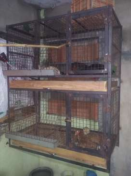 Cage for pet poultry hens
