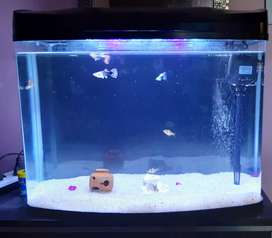 Fish Tank with Filter and LED Light