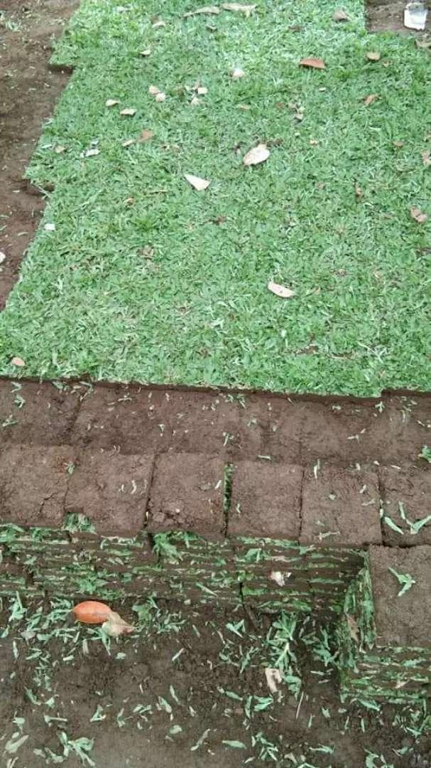 Suplyer rumput hias wilayah morowali 0