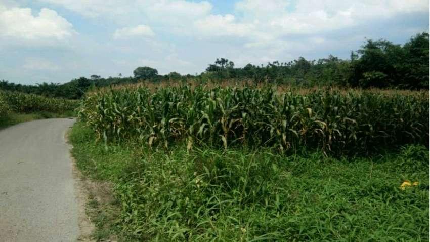 Tanah murah di medan (Harga Akhir Oktober) 0
