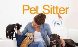 Pet sitter dan dog walking