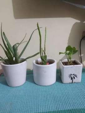 Set of indoor plants with ceramic pots