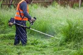 Jasa potong rumput dan potong pohon area kota Banda aceh