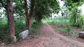 Tanah Luas di Gunung Kidul NPL308-1