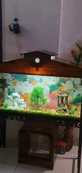 4X1 feet aquarium with all equipments, stand and fishes