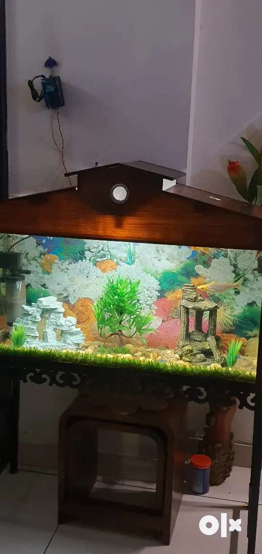 4X1 feet aquarium with all equipments, stand and fishes 0