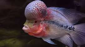 Hii friends imported florans babies available