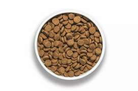 Open dog food available