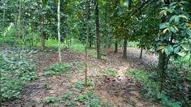 Jual Tanah Kebun Produktif
