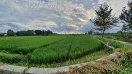 Jual Tanah sawah lokasi istimewa daerah gondang klaten