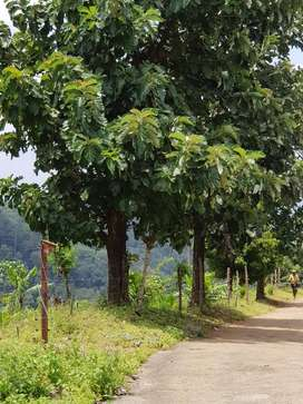 Woods for Sale at Thenmala