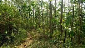 Tanah + 4000 pohon Jati : Sumedang Subang Rancakalong Tanjungsari