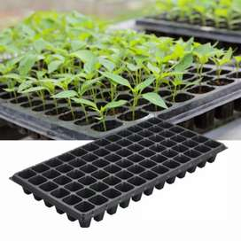 Seedlings Tray