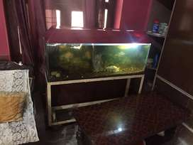 Fish Aquarium with Iron Stand for sale