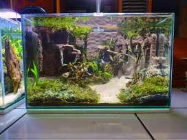 aquarium aquascape 40cm
