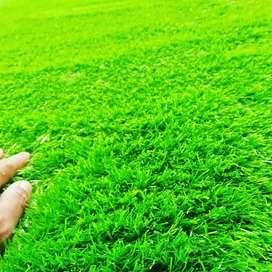 Pasaran Saat Ini Ada Rumput Sintetis Taman Untuk Kebutuhan Dekorasi