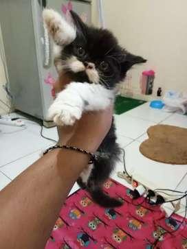 Lepas adop kucing borongan edisi akhir tahun