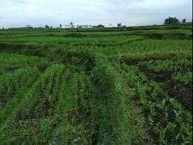 Jual tanah sawah subur 280 tumbak di Garut