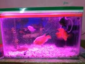 2ft/1.6 ft aquarium for sale