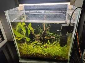 Small natural plant aquarium