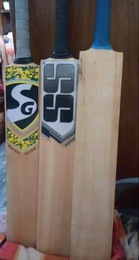 hard ball cricket bat.