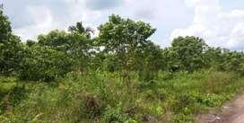 Dilengkapi kolam..Berisi sawit durian Dll Jual dan sewakan untuk usaha