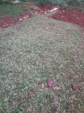 Jual segala jenis tanaman rumput