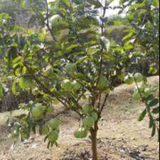 Agriculture plots for sale at KANDI